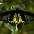 Butterfly Garden Insectarium