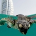 Jumeirah Turtle Rehabilitation