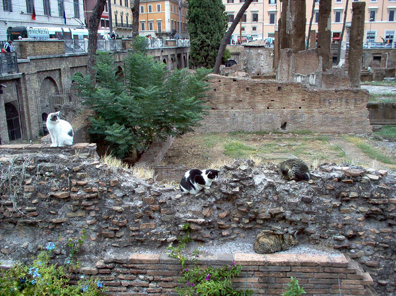 Rome Free Cats