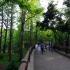 Rinshi No Mori Park