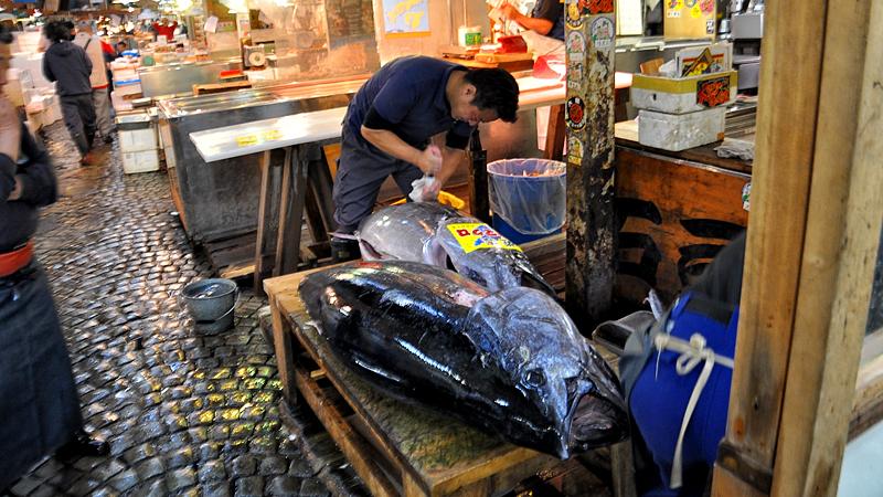 Tsukiji fish market tuna auction broke tourist for Tsukiji fish market chicago