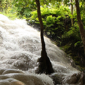Bua Tong (Sticky) Waterfall