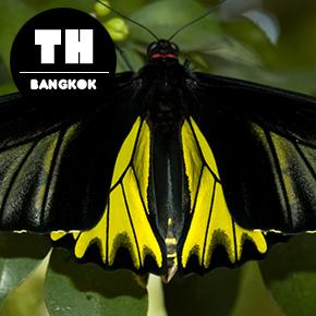 Butterfly Garden & Insectarium