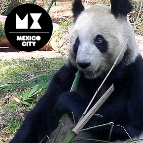 Chapultepec Zoo Panda