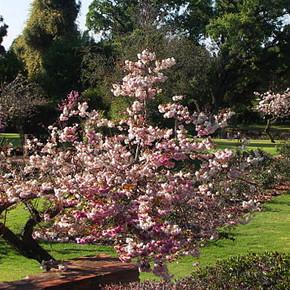 Johannesburg Botanical Garden and Emmarentia Dam