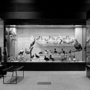 Zoological Museum | University of Zurich